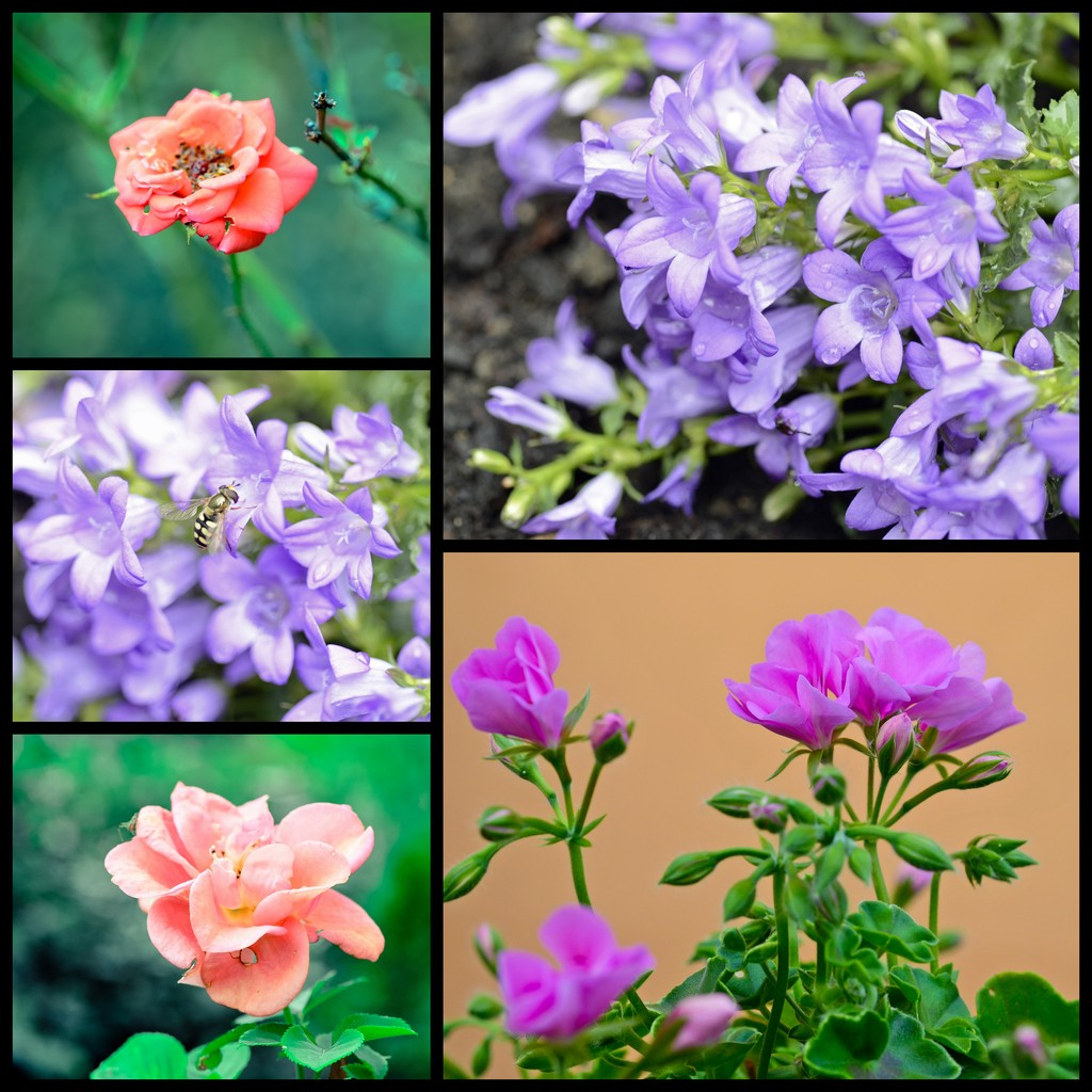 Dans mon jardin...